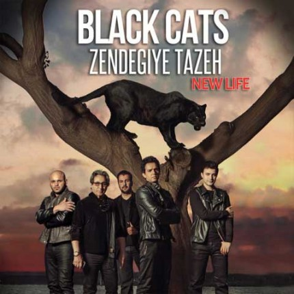 black-cats-zendegiye-tazeh